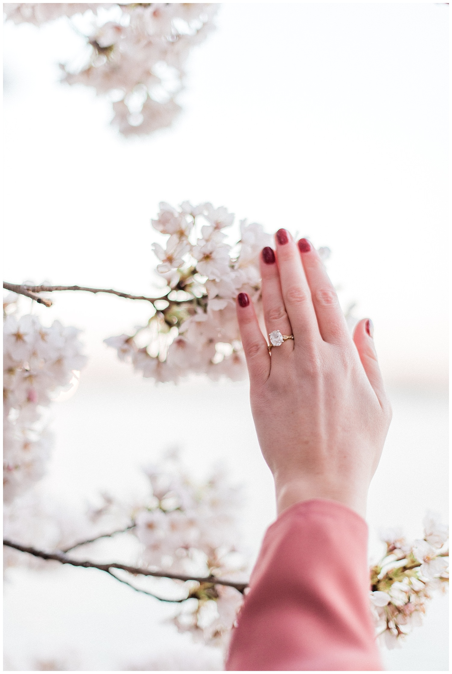 DC Cherry Blossom Engagement Photos - Rachel Galluzzo Photography